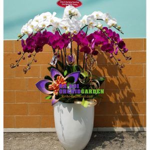 Chậu hoa lan đẹp HDS-1220