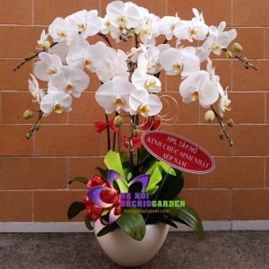 Chậu hoa phong lan trắng 6 cành HDT-0609