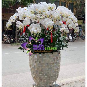 Hoa phong lan trắng chúc tết HDT-260