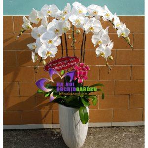 quà tặng khai trương công ty, cửa hàng HDT-0524