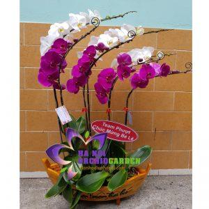 thuyền hoa phong lan trắng tím HDS-0720