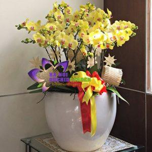 chậu hoa lan đẹp HDV-1808