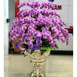 chậu hoa lan hồng chưng sảnh lớn khách sạn HDH-5502