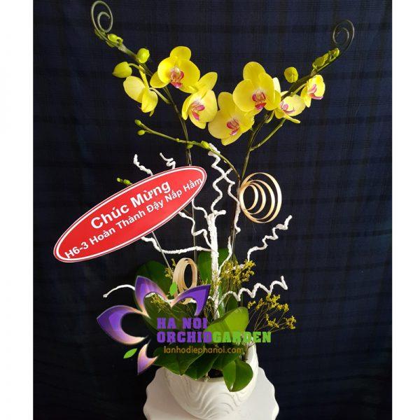 chậu hoa lan vàng HDV-0205