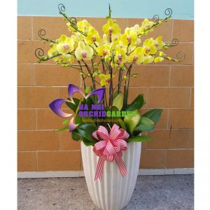 ghép chậu hoa lan đẹp HDV-1020