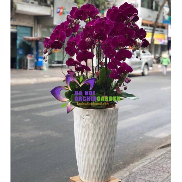 Chậu hoa lan đẹp HDD-0907
