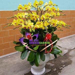 Chậu hoa lan vàng tặng sếp lớn HDV-3006