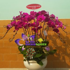 Hoa phong lan sinh nhật HDD-1202