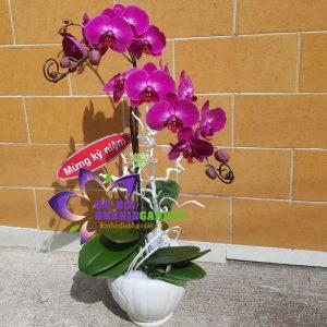 Chậu hoa lan tím Sánh đôi HDD-0208