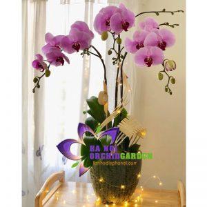 Hoa lan tặng sinh nhật HDH-0308