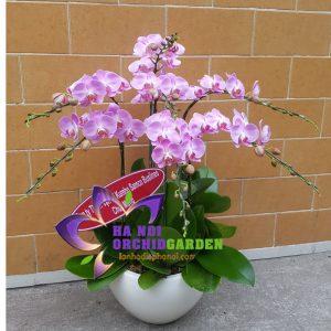 tiểu hồ điệp màu hồng HDH-0708