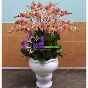 hoa phong lan hồ điệp cam 30 cành HDC-3001