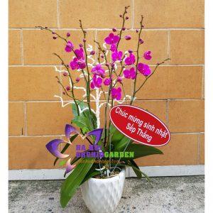 chậu hoa lan mini đẹp THD-0202
