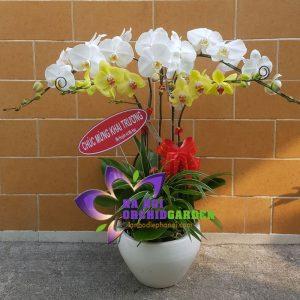 Vườn lan hồ điệp Hà Nội HDS-0511