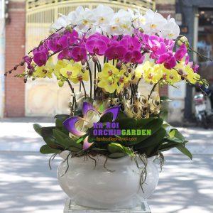 Ảnh hoa lan HDS-2603