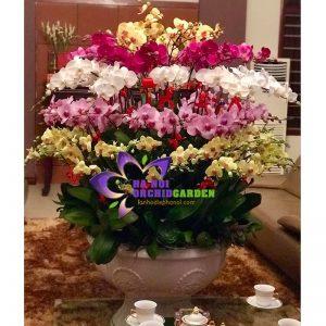 Chậu hoa lan tết HDS-8613