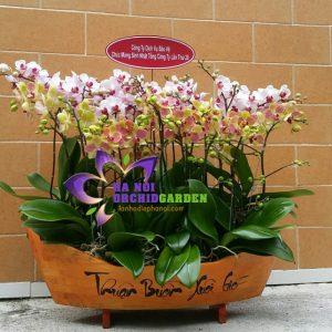 thuyền gỗ trồng hoa lan hồ điệp MIDS-1501
